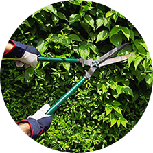 Shrub & Tree Trimming